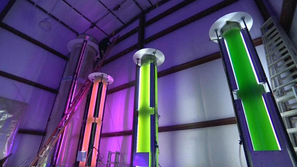 Řasy můžou likvidovat skleníkové plyny