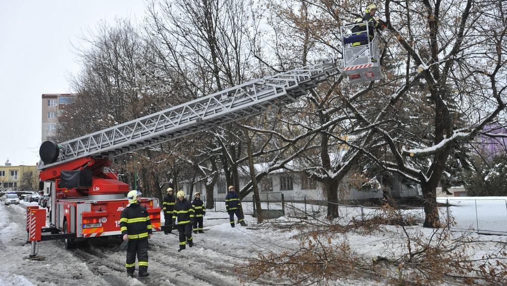 Stromy nevydržely nánosy sněhu