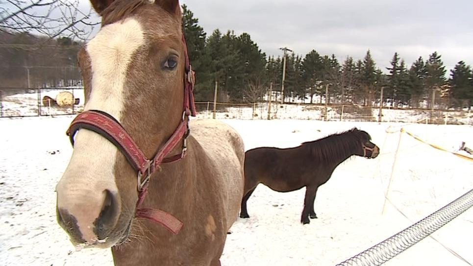 Koně vyvázli bez újmy