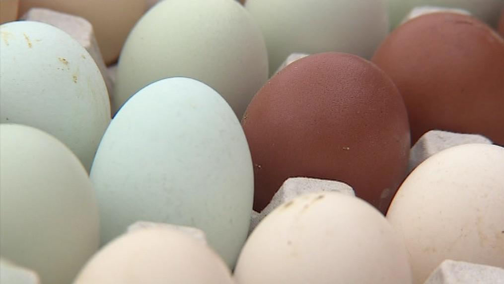 Chovatelka si pochvaluje, že nemusí vajíčka barvit
