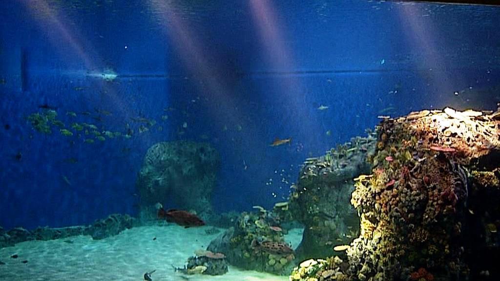 Akvárium v Kodani