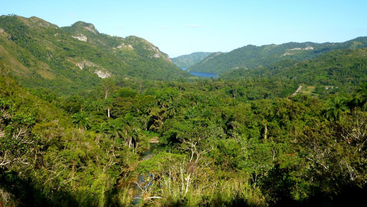 Deštný les