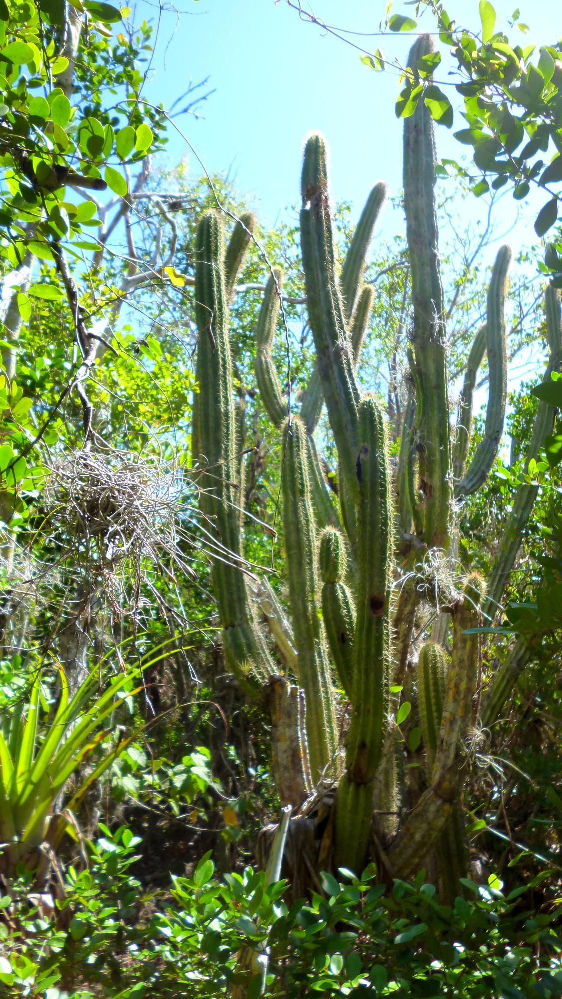 Příroda v rezervaci Hicacos