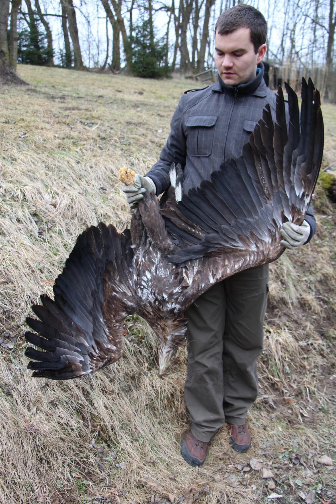 Zbyšek Karafiát s mrtvým orlem mořským