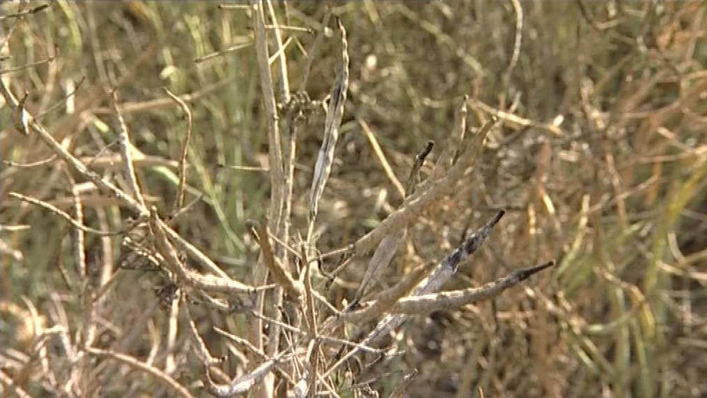 Sucho připravilo zemědělce o miliony