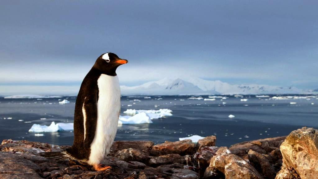 Tučňák na Antarktidě