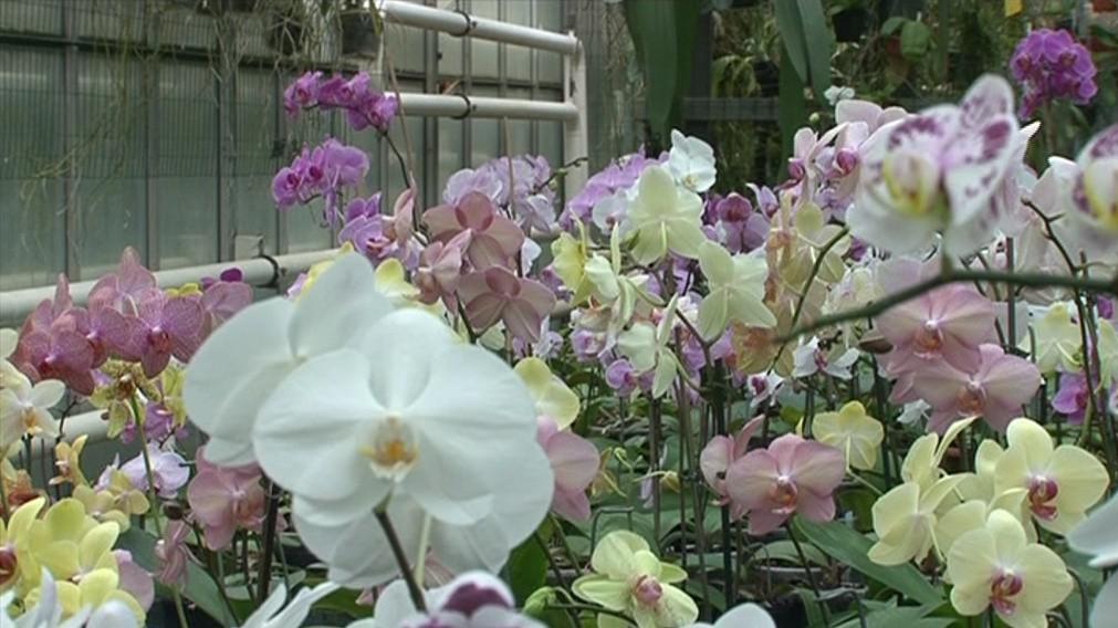 Pěstitelé mají v zahradách i laboratoř na opylování