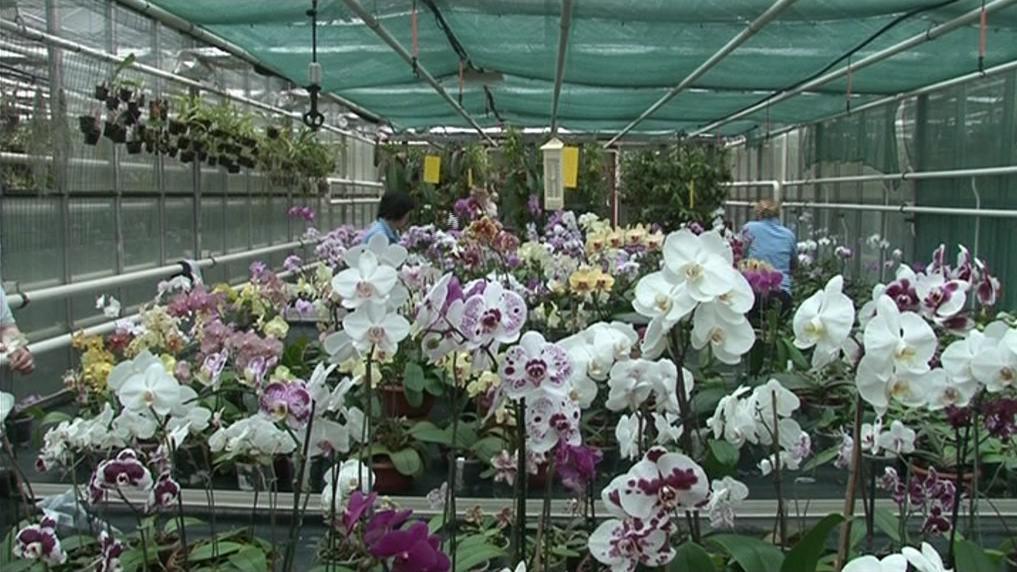 Sbírku orchidejí univerzita stále rozšiřuje