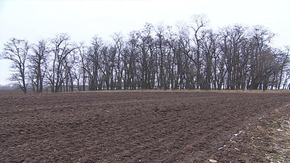 Podle klimatologů se pšenici na jihu Moravy už dařit nebude