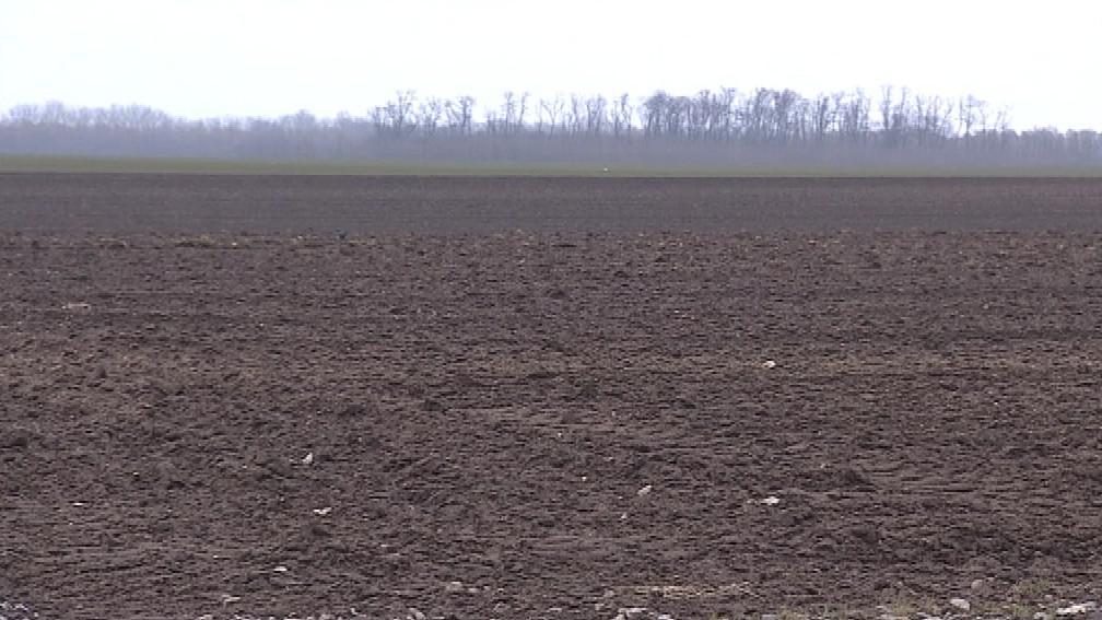 Jihomoravští zemědělci by prý měli pěstovat spíše kukuřici