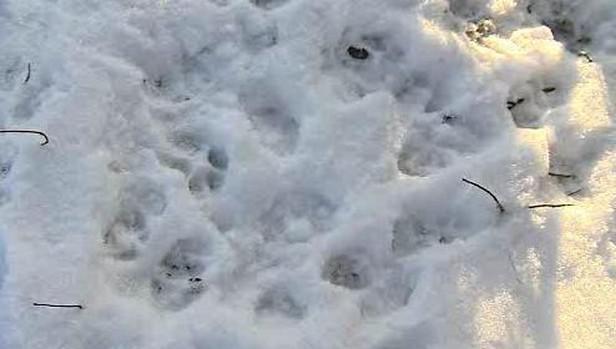 Ochránci přírody našli stopy šelem