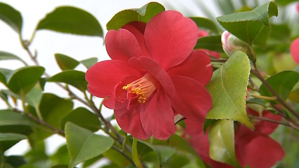 Krásná rostlina z Asie je nyní k vidění v Kroměříži