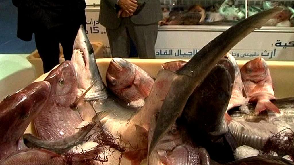 Maroko chce být rybářskou velmocí