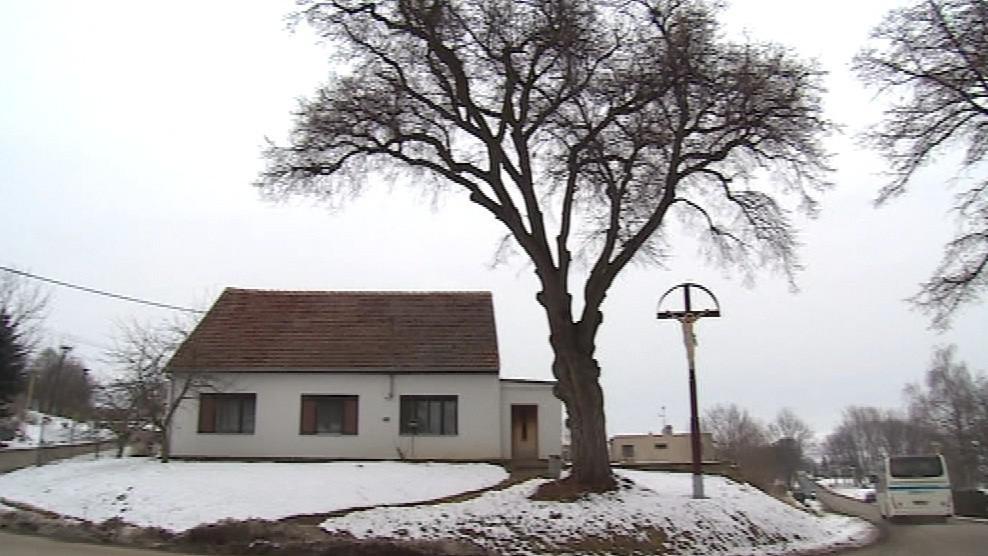 V obci se pyšní památnou lípou