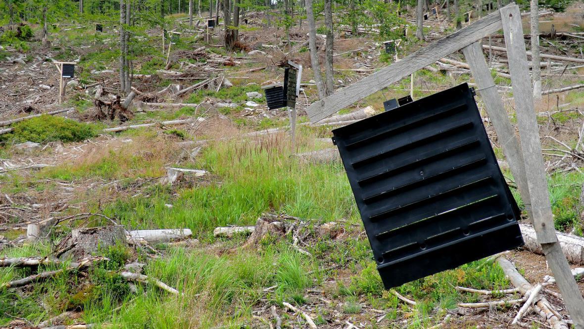 Kůrovcové lapače na Šumavě