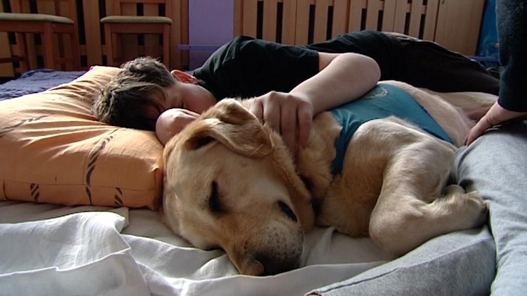 Psi pomáhají zdravotně postiženým dětem