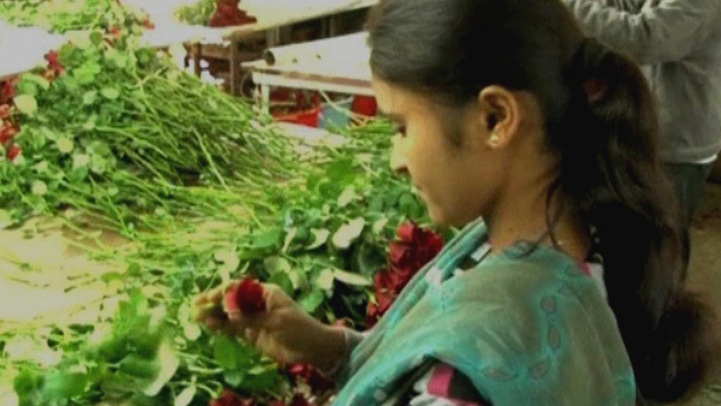 Indické růže