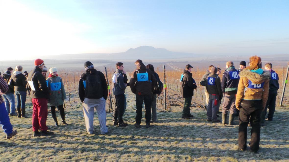 Vinohradníci měřili svou zručnost na odrůdě Pálava