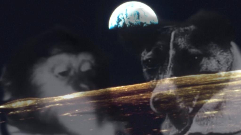 Zvířecí astronauti Ham a Lajka