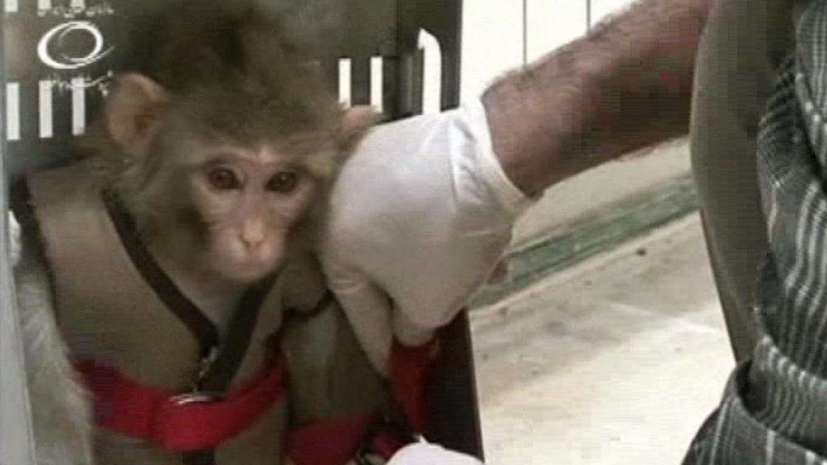 Íránský opičí astronaut