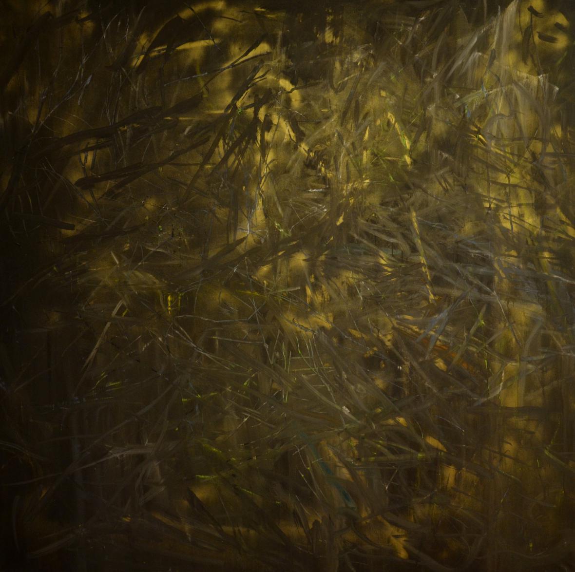 Kristýna Šormová / Křovím a pralesem (z cyklu Místo, kam nepatřím), 2012
