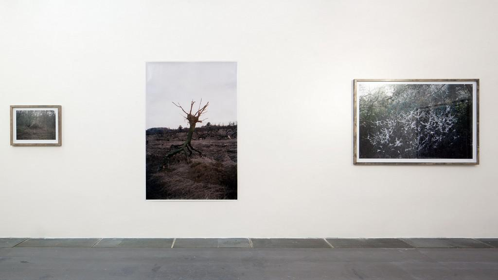 Jan Bigas / z cyklu Kdesi mezi lesy, 2012