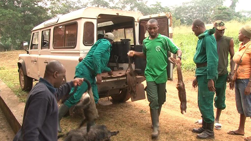 Ulovené kamerunské opice