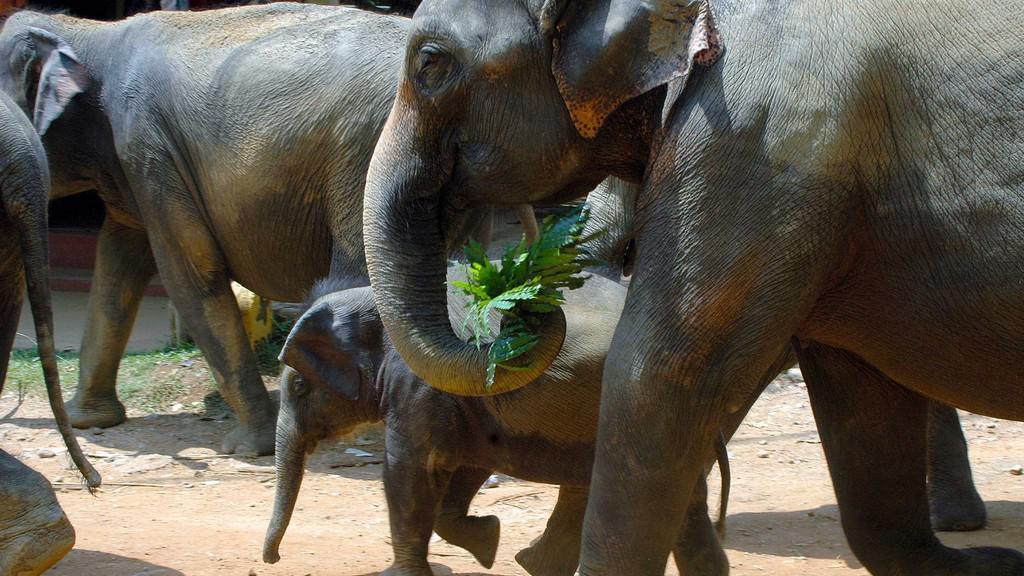 Fotografie Petra Našice z Pinnawala Elephant Orphanage