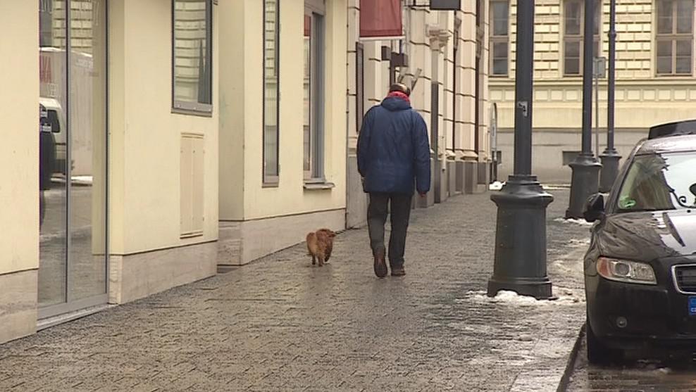 Psi dnes doprovází své pány často všude