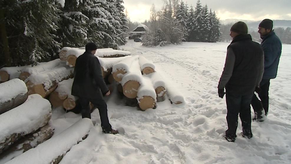 Desítky stromů padly za oběť lepšímu výhledu z rozhledny