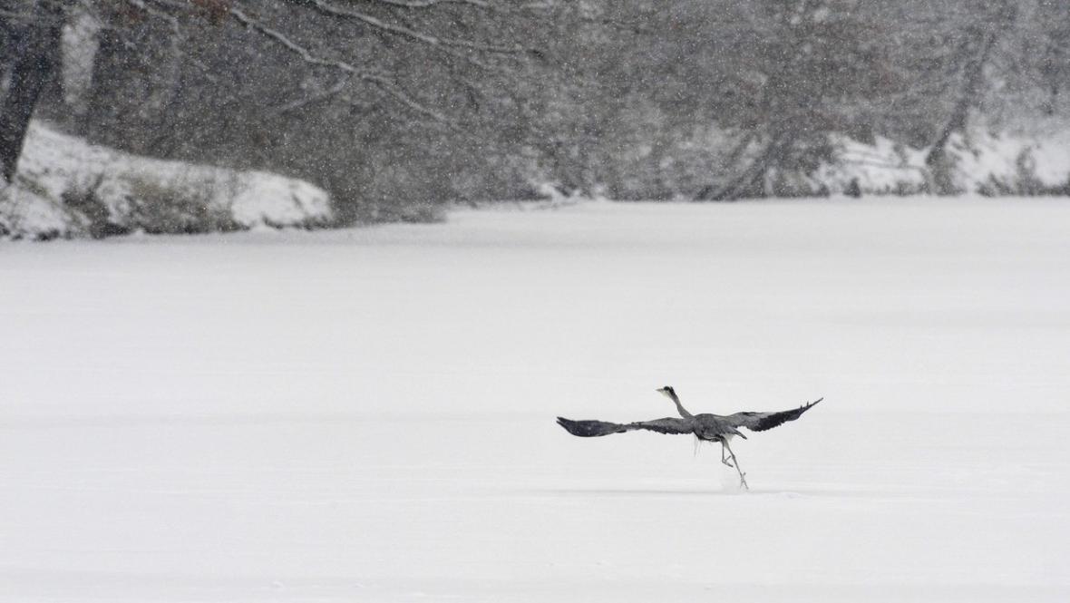 Zamrzlý rybník na Přerovsku