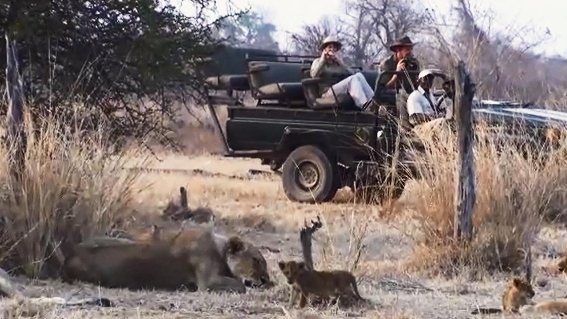 Safari v Zambii