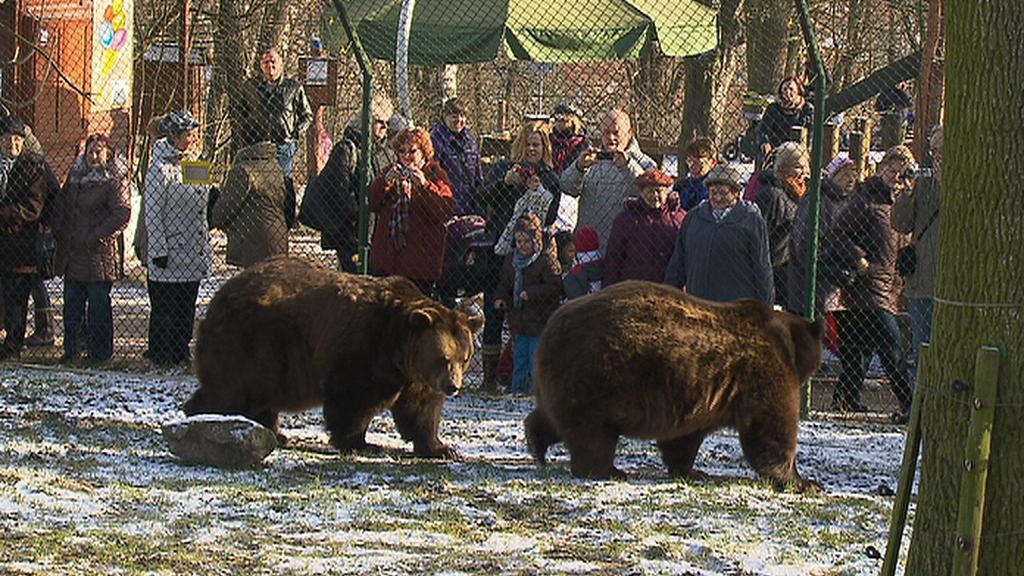 Berounští medvědi