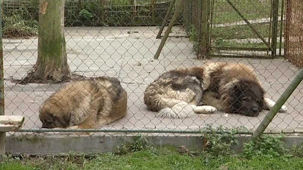 Psi jsou v útulku osamělí
