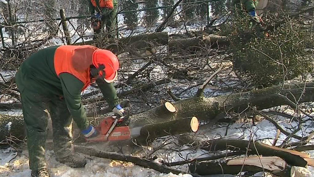 Kácení stromů ve Zlíně