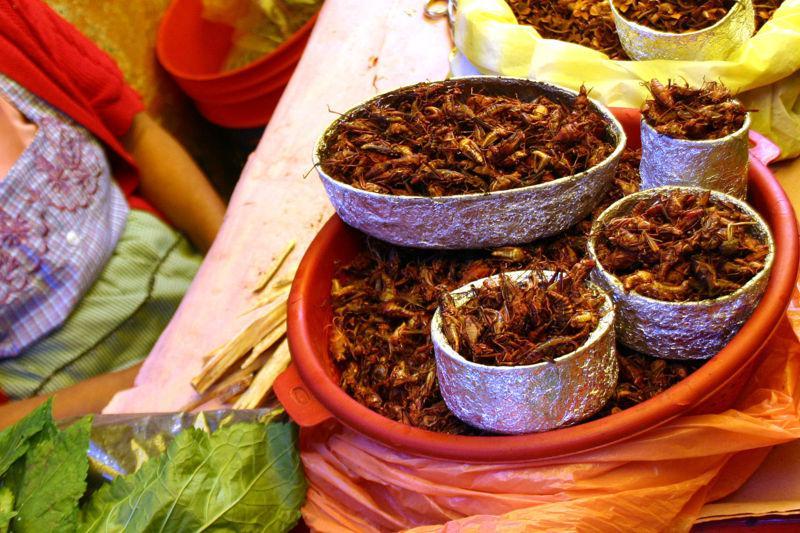 Fritovaný hmyz na mexický způsob