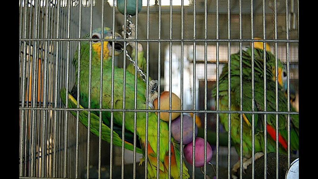 Zabavení papoušci