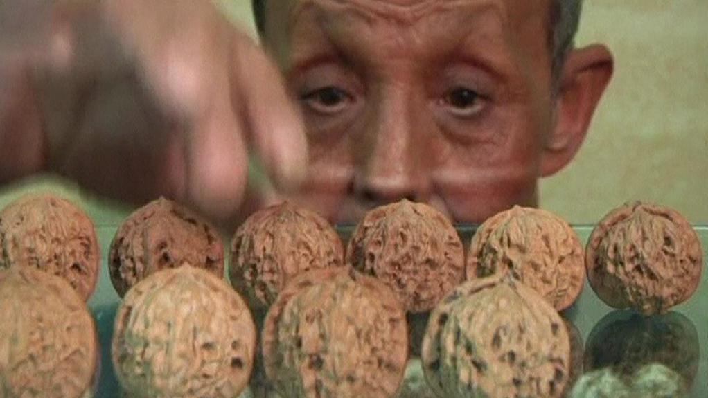 Sběratel vlašských ořechů v Číně