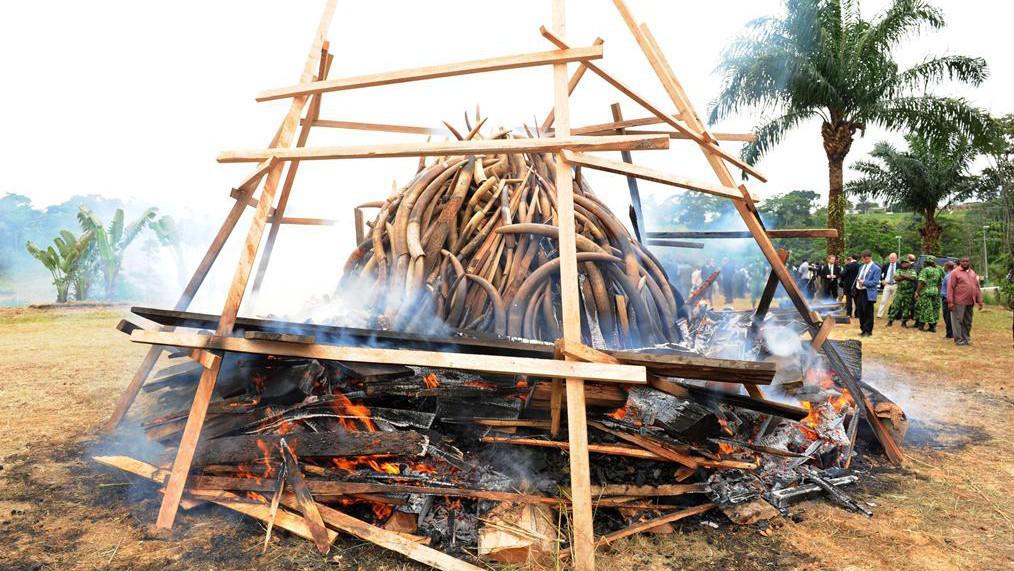 Demonstrativní pálení slonoviny