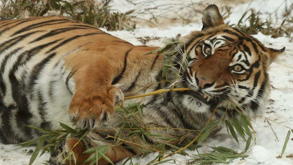 Zoologické zahrady lákají návštěníky na vánoční program