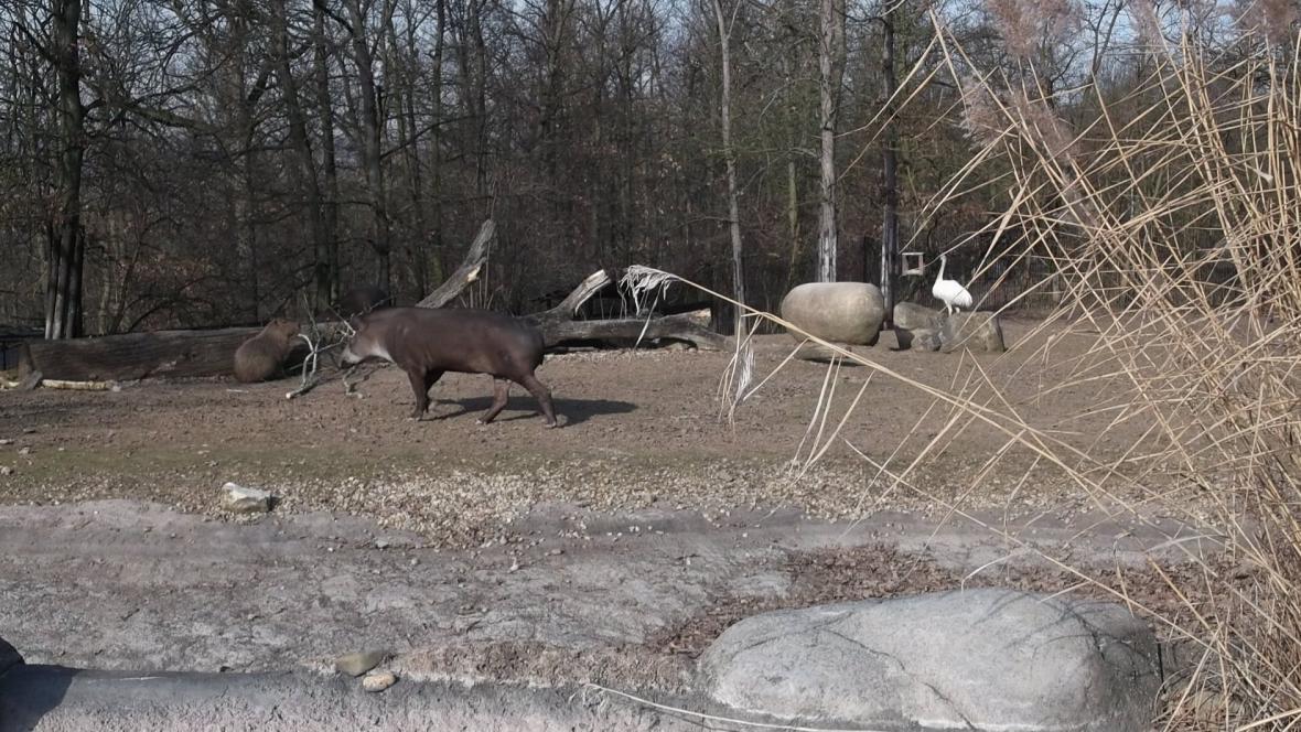 V brněnské zoo jsou na zimu připraveni