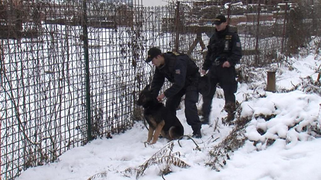 Při stopování zloděje musí psovodi často překonávat náročné překážky