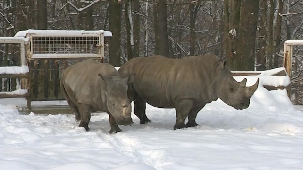 Nosorožci ve zlínské zoo