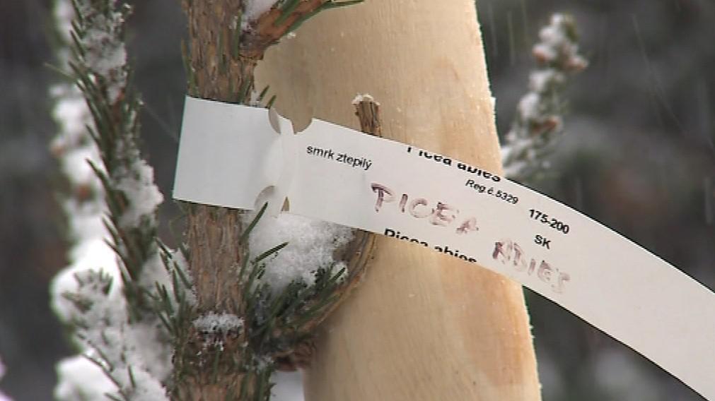 Vlastní stromek v lednickém parku stojí tisíc korun na rok
