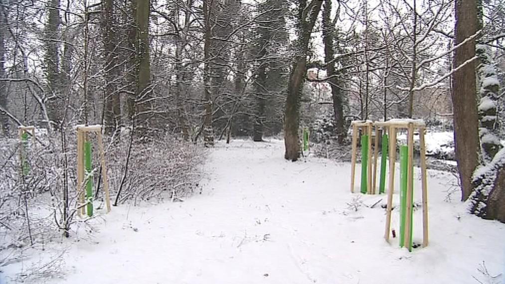 V rámci rozsáhlé obnovy parku vysadili zahradníci tisícovku nových stromků