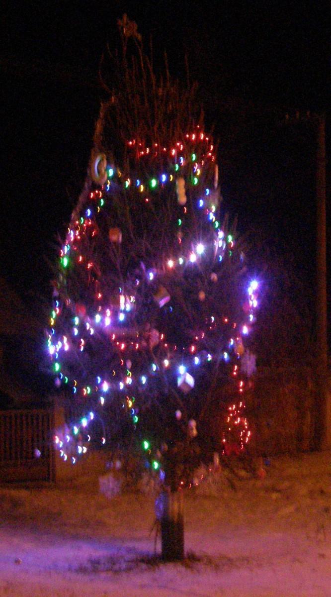 Rozsvícený stromeček v Kololeči