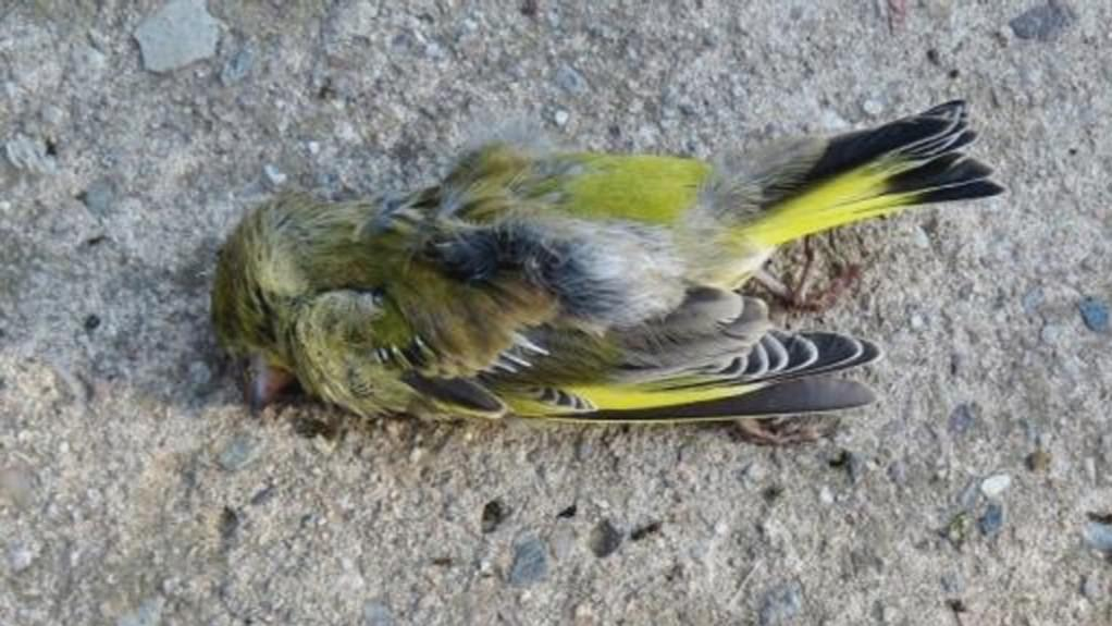 Uhynulý pták