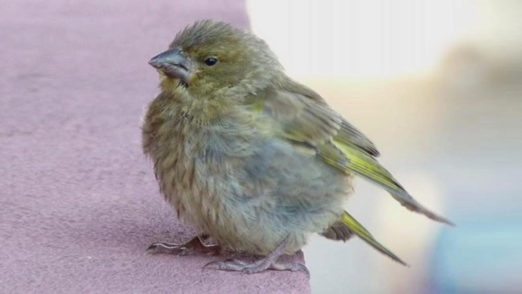 Nakažený pták