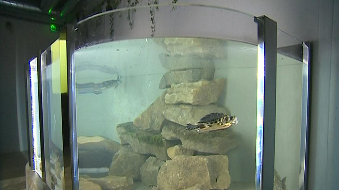Expozice ukazuje ryby v několika nádržích, tůních a rybnících