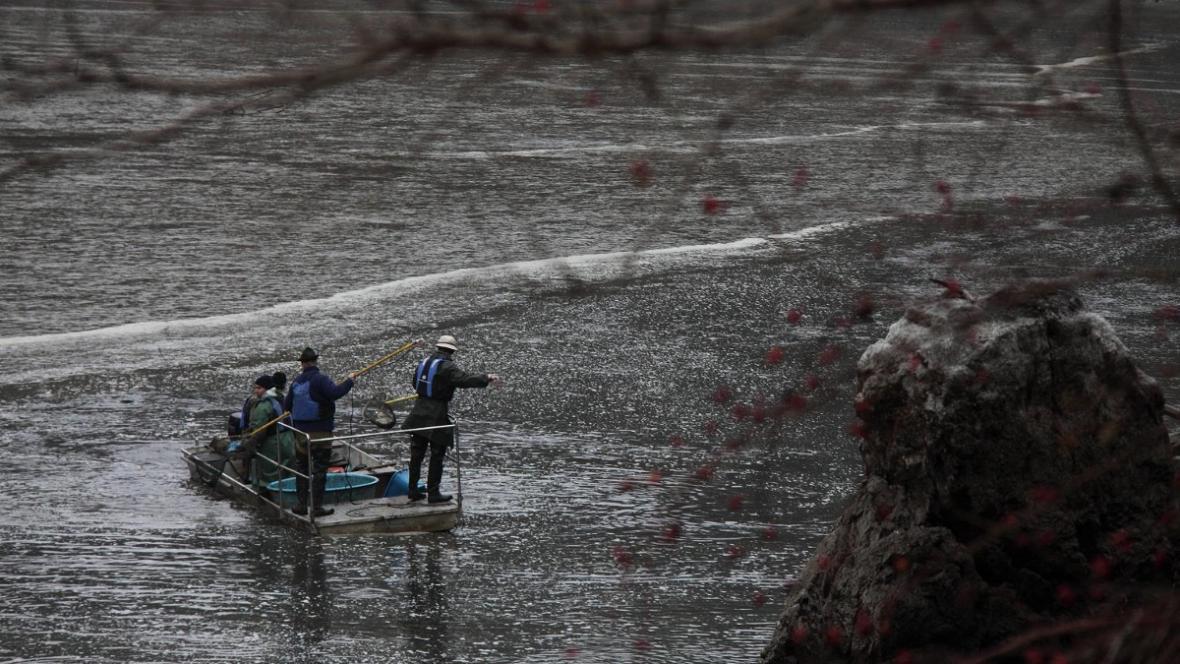 Výlov Jevišovické přehrady před bagrováním sedimentů